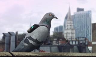 plume-labs-air-report-pigeon-patrol