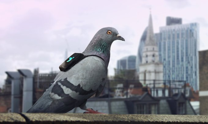Plume Labs Air Report Pigeon Patrol